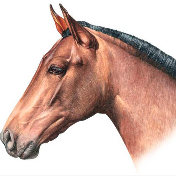 centauros.jpg