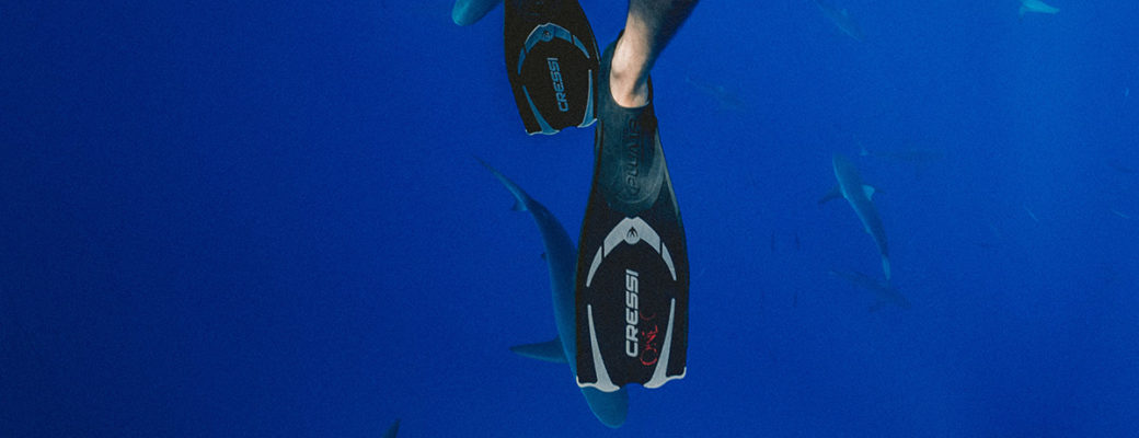Australia Sharks