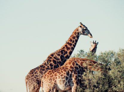 South Africa Kruger National Park 2